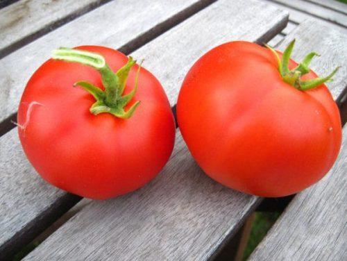сорт москвич помидоры отзывы